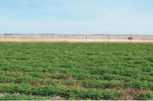 盐碱地治理和土壤改良